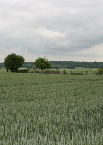 La plaine vue des Froulands