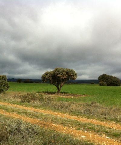 Le chemin vers Villar DEL Mazariffe en Castille